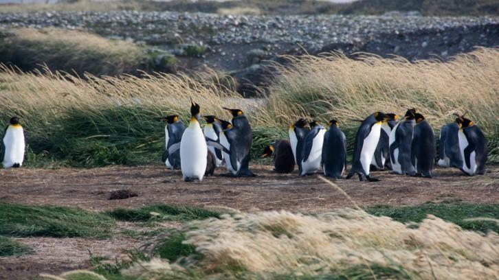 Von Weihnachten, Kühlhäusern und Pinguinen